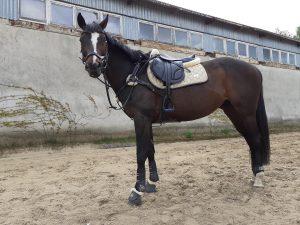 Jest to siodło close contact zapewniające maksymalną bliskość z koniem dzięki płaskim panelom, pomiędzy którymi jest 7 cm szerokości co zapewnia wystarczającą przestrzeń na kręgosłup konia podczas jazdy.