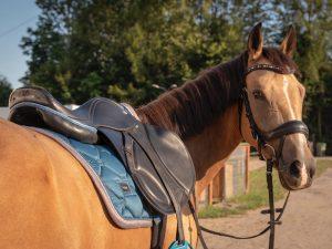 Dzięki nowoczesnej carbonowej terlicy jest wytrzymałe, oraz zapewnia maksymalny komfort dla jeźdźca i konia podczas jazdy.